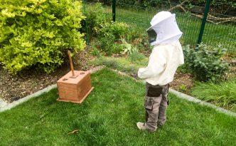 Jungimker fängt Bienenschwarm